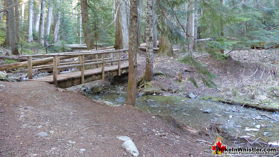 Ancient Cedars Trail in Whistler