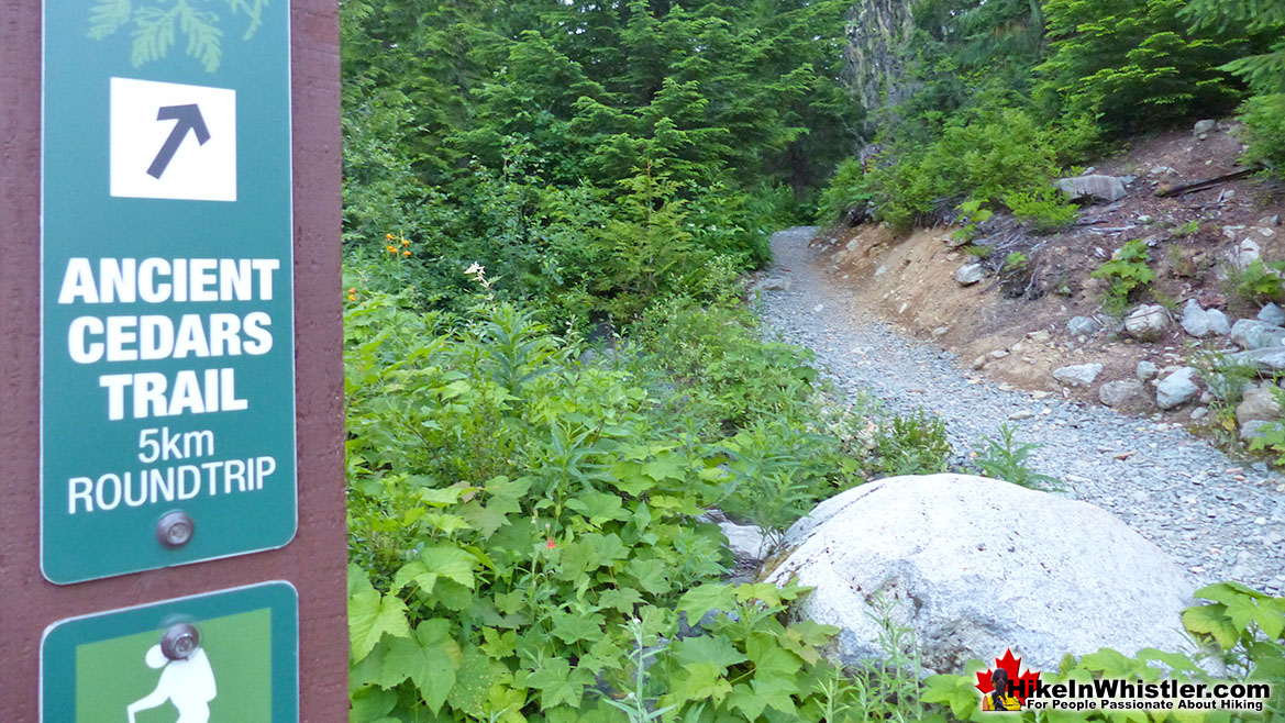 Ancient Cedars Trailhead Hike in Whistler