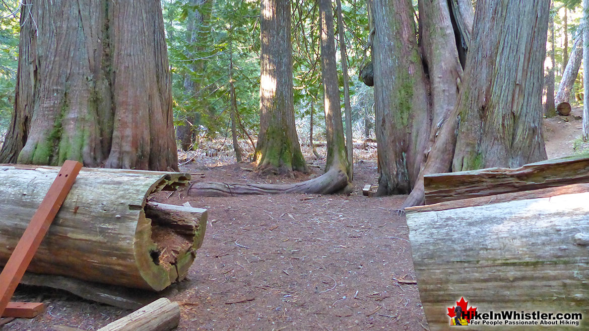 Ancient Cedars Hike in Whistler 3