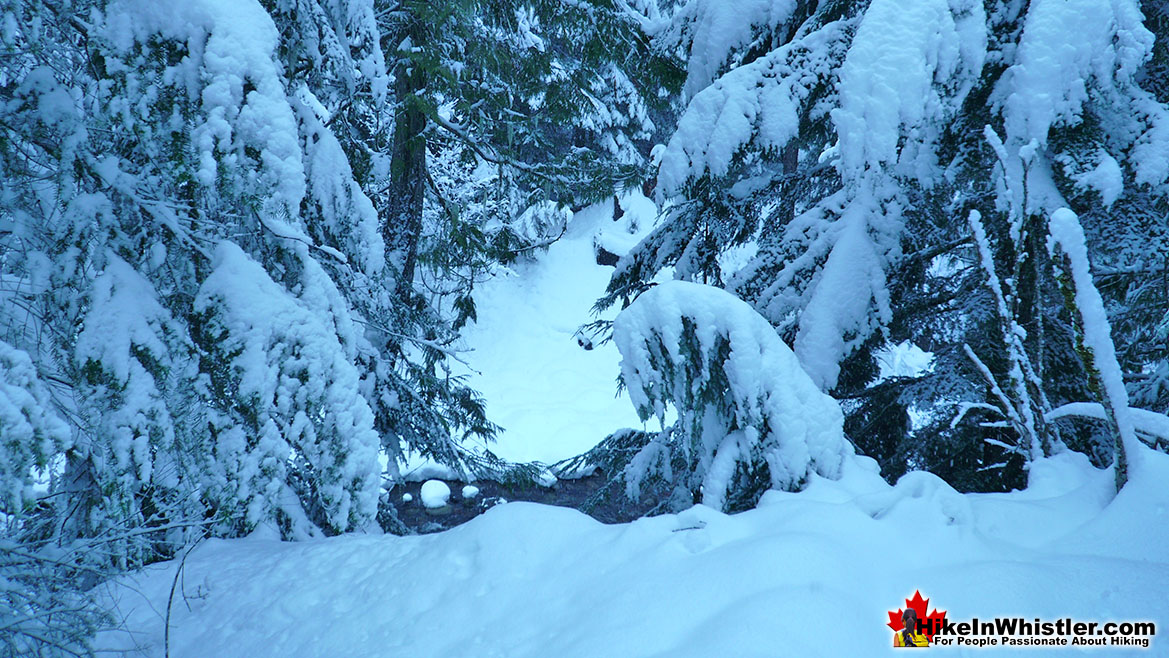 Cheakamus River Deep Snow